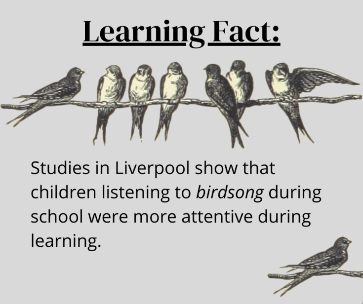 Facts about listening to birdsong while learning
